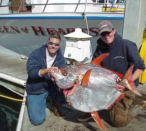 Queen Of Hearts Sportfishing Fishing Report Pillar Point
